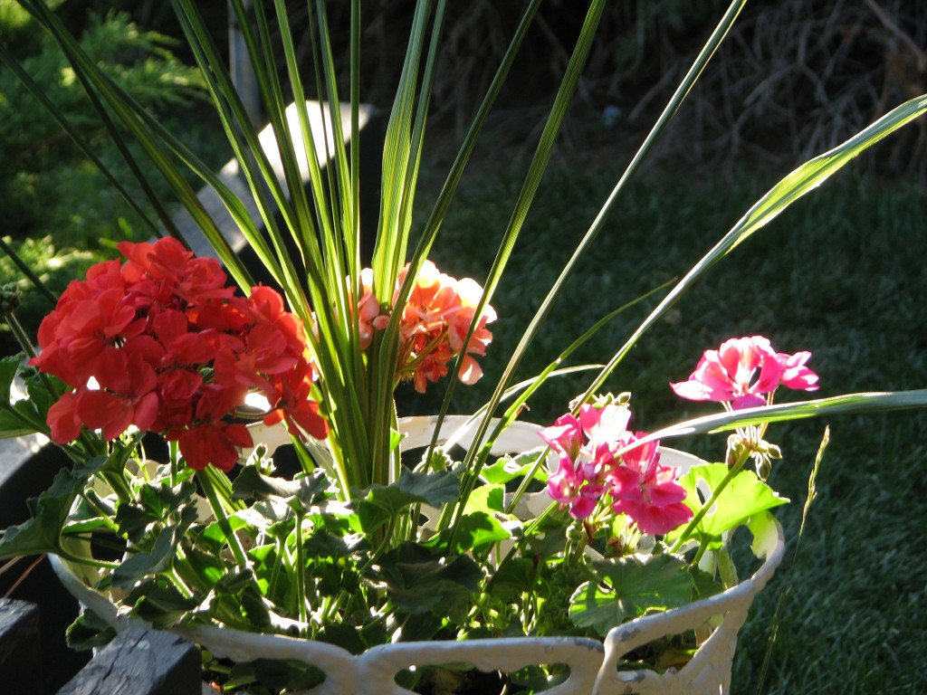 flowers in an outdoor planter
